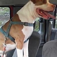 Adopt A Pet :: True - Fultonham, NY