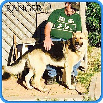 German Shepherd Dog Mix Dog for adoption in DeForest, Wisconsin - Ranger