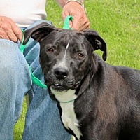 Adopt A Pet :: Flavia - Liberty Center, OH