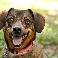 Adopt A Pet :: Warren - Austin, TX