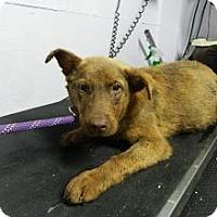Adopt A Pet :: Tuck - Livonia, MI