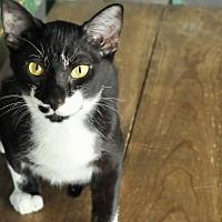 Adopt A Pet :: Batman - San Antonio, TX