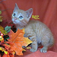 Adopt A Pet :: Mr. Michael - Herndon, VA