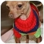 Photo 3 - Chihuahua Dog for adoption in House Springs, Missouri - Benji