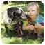 Photo 1 - Labrador Retriever/Catahoula Leopard Dog Mix Dog for adoption in Thomaston, Georgia - Patches