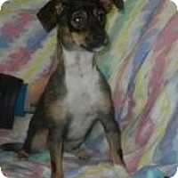 Adopt A Pet :: Lady PawPaw ADOPTED!! - Antioch, IL