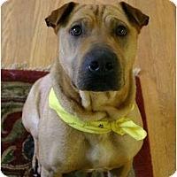 Adopt A Pet :: Ziggy - Auburn, CA