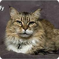Adopt A Pet :: Muffy - Portland, OR