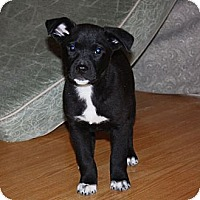 Adopt A Pet :: Abby - PENDING, in Maine - kennebunkport, ME