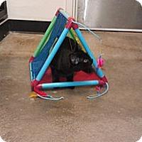 Adopt A Pet :: Gumdrop - Greenville, SC