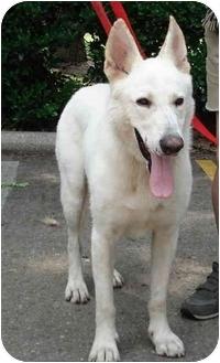 German Shepherd Dog Dog for adoption in Kingwood, Texas - Little John