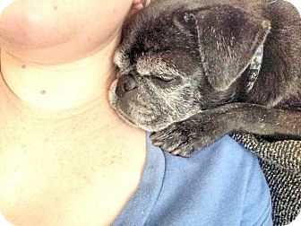 Pug Dog for adoption in Austin, Texas - Jackie