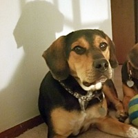 Adopt A Pet :: Decker (Foster or Adopt) - Columbus, OH