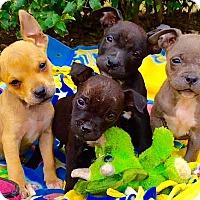 Adopt A Pet :: Pharell** Video** - Pasadena, CA