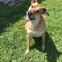 Adopt A Pet :: Kratos - Austin, TX