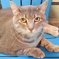 Adopt A Pet :: Jessie - Holden, MO