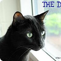 Adopt A Pet :: The Dude - Hamilton, ON