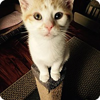Adopt A Pet :: Hercules - Cincinnati, OH