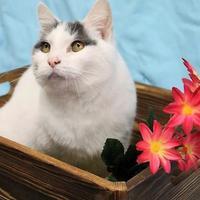 Adopt A Pet :: Misty - West Des Moines, IA