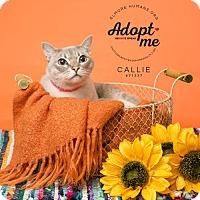 Adopt A Pet :: 71337  Callie - Wetumpka, AL