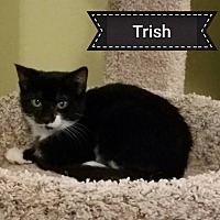 Adopt A Pet :: Trish - Toms River, NJ