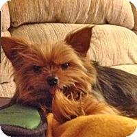 Adopt A Pet :: Cujo - Cleveland, OH