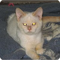 Adopt A Pet :: Flame - Richfield, OH