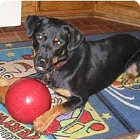 Adopt A Pet :: Bristole - Mason, MI