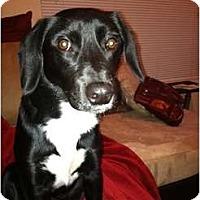 Adopt A Pet :: *Jet - Winder, GA