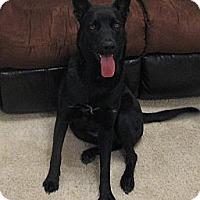 Adopt A Pet :: Piper in AZ - Jamestown, CA