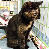 Adopt A Pet :: Riley - N. Billerica, MA