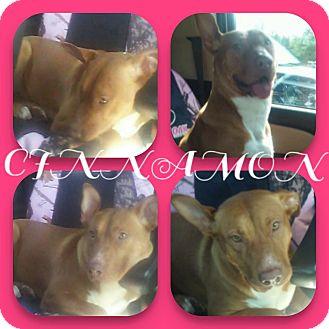 Labrador Retriever Mix Dog for adoption in Sterling Heights, Michigan - Cinnamon