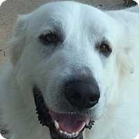Adopt A Pet :: Parker ADOPTION PENDING - Bloomington, IL