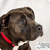 Adopt A Pet :: Bo - North Myrtle Beach, SC