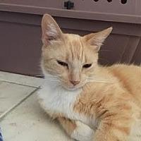 Adopt A Pet :: Kanga - Chandler, AZ