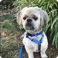 Adopt A Pet :: mikie - Greensboro, NC