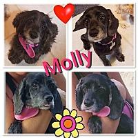 Adopt A Pet :: Molly - Santa Barbara, CA