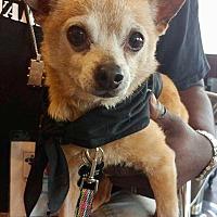 Adopt A Pet :: Rudy - Hockessin, DE