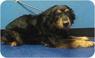 Collie Mix Dog for adoption in Dennis, Massachusetts - BUDDY