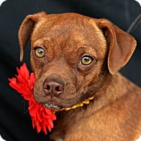 Adopt A Pet :: Kia - Plano, TX
