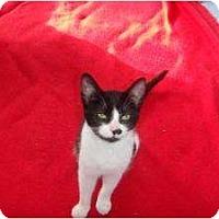 Adopt A Pet :: Star - Montreal, QC