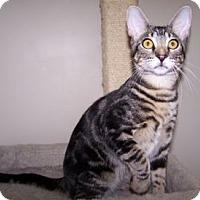 Adopt A Pet :: K-Hirsh6-Bartholo-mew - Colorado Springs, CO