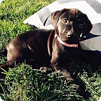 Adopt A Pet :: Ninji - Seattle, WA