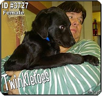 American Water Spaniel Mix Dog for adoption in Corinth, Mississippi - Twinkletoes
