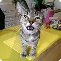 Adopt A Pet :: Katerina - Brooklyn, NY