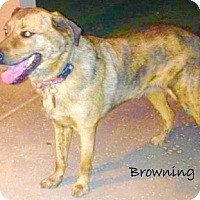 Adopt A Pet :: Browning - Scottsdale, AZ