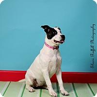 Adopt A Pet :: Emmi - Jackson, TN