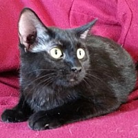 Adopt A Pet :: Meka - Lemoore, CA