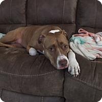 Adopt A Pet :: Daisy - Ocean Ridge, FL