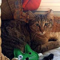 Adopt A Pet :: Shadow - Lombard, IL